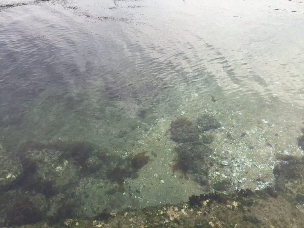 瀬戸内海は澄んだ海